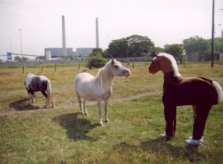 muf developed a website as a parallel, speculative investigation into the local landscape: an exploration of people's relationship to that landscape through the presence of wandering ponies.